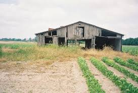 Photos Of Old Barns Old Barn Along Hgy 61 Picture Of Mississippi Delta Greenville