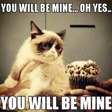 Grumpy Cat Yes Meme - image 589767 grumpy cat know your meme