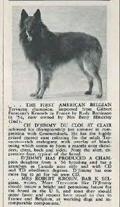 belgian sheepdog of america belgian shepherd puppies www pups4sale com au belgians