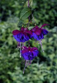 Pretty Plants by 114 Best Pretty Flowers Images On Pinterest Nature Plants And