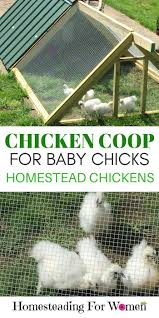 332 best chickens images on pinterest