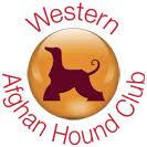 afghan hound rescue england afghan hound rescue western afghan hound club
