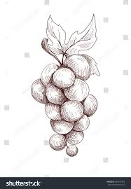 vector decoration grapes hand draw picture stock vector 405437332