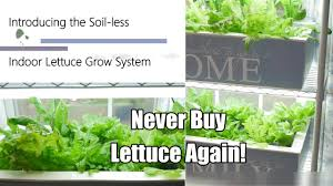 never buy lettuce again the indoor soil less lettuce grow system