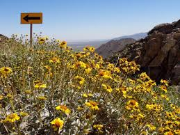 spring is busting out all over anza borrego desert state park kcet