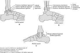 Lateral Collateral Ligament Ankle Radiologic Evaluation Of The Ankle And Foot Fundamentals Of
