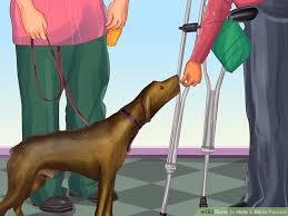 Pictures Of Blind Dogs How To Help A Blind Person With Pictures Wikihow