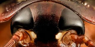 bbc earth which animal has the most sensitive eyes