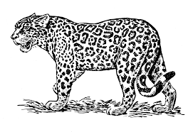 jaguar 11 animals u2013 printable coloring pages