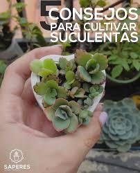 resume modernos terrarios suculentas saperes nos cuenta los 5 cuidados clave para sus suculentas