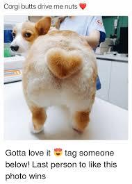 25 best memes about corgi butt corgi butt memes
