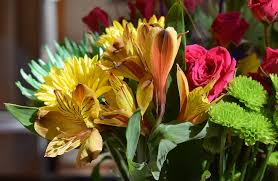 Alstroemeria Free Photo Alstroemeria Peruvian Lily Free Image On Pixabay