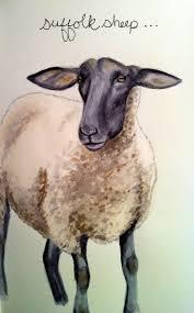 Suffolk County Mass Planet Suffolk 84 Best Sheep Images On Pinterest Suffolk Sheep Sheep And Farm