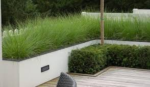 white rendered low garden wall grasses and box hedge white