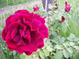 shopping flower fr u0026d firenze