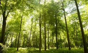 Trees Worldwide The Fate Of Trees How Climate Change May Alter Forests Worldwide