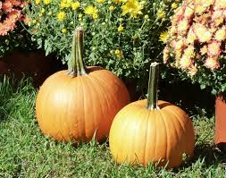 Best Pumpkin Patch Albany Ny by Fishkill Farms Apple Orchard Pick Your Own Apples Diversified