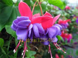 lantern flower online get cheap flower lantern aliexpress alibaba