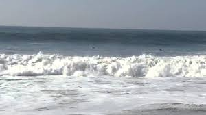 dolphins and men surfing at rodeo beach youtube