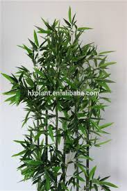 indoor ornamental plants indoor ornamental plants suppliers and