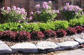 Bushes For Landscaping Shrubs Atlanta Landscaping Company