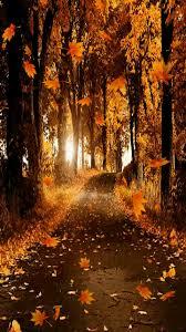 imagenes animadas de otoño 32 imágenes animadas hojas de otoño 1000 gifs paisajes
