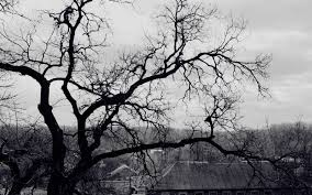 black and white tree roof creepy branch hd wallpaper