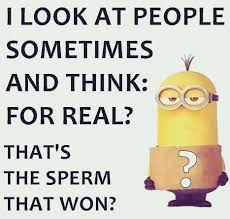Funny Minion Memes - top 35 funniest minions memes funny minion memes and humor