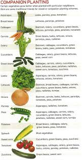 best 25 companion planting guide ideas on pinterest companion