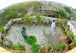 terrace gardening terrace gardening tips tricks in india cost of terrace
