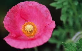 Beautiful Flowers Beautiful Flowers