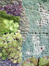 27 best succulent wall images on pinterest vertical gardens