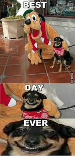 Best Day Ever Meme - best day ever via 9gag com best day ever meme on me me