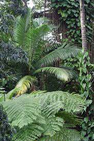 Cairns Botanical Garden by Photos Trees And Forests 1 Reforestation Me