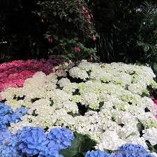 indoor bloomers nicholson hardie garden u0026 nursery in dallas tx