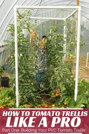 How To Build A Trellis Easy Pvc Tomato Trellis Part One