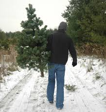 christmas trees 5 u0026 free for fourth graders vermont public radio