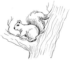 coloriages à imprimer animaux ecureuil page 1