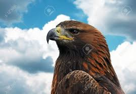 national bird stock photos u0026 pictures royalty free national bird