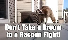 Broom Meme - don t take a broom to a racoon fight the big show