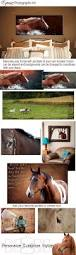 Equine Home Decor by Equine Photography Gordonphotography Biz