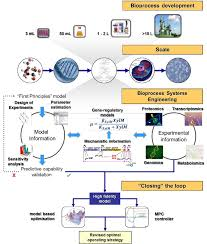 a bioprocess systems engineering framework for model development in