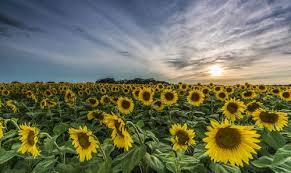 sun prairie wi estate homes condos lots for sale