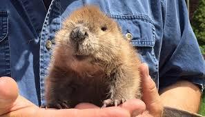 Kansas wild animals images Ne kansas volunteer group goes wild to rescue animals jpg