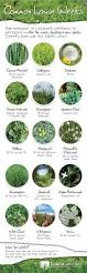 common lawn weeds u2013 learn to identify them naturally bubbly
