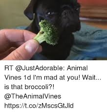 Im Mad At You Meme - rt animal vines 1d i m mad at you wait is that broccoli