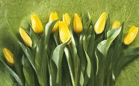 tulips tapety pozadia international womens holidays
