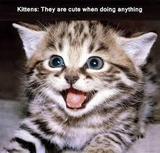 Cute Kitten Memes - kitten meme by unuspartum on deviantart