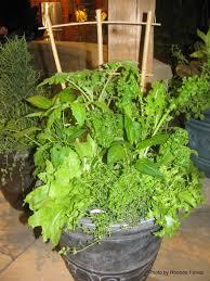 grow food indoors this winter u2013 dig it