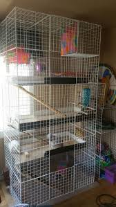Cheap Rat Cage Best 25 Grande Cage Lapin Ideas On Pinterest Cage Hamster Degu